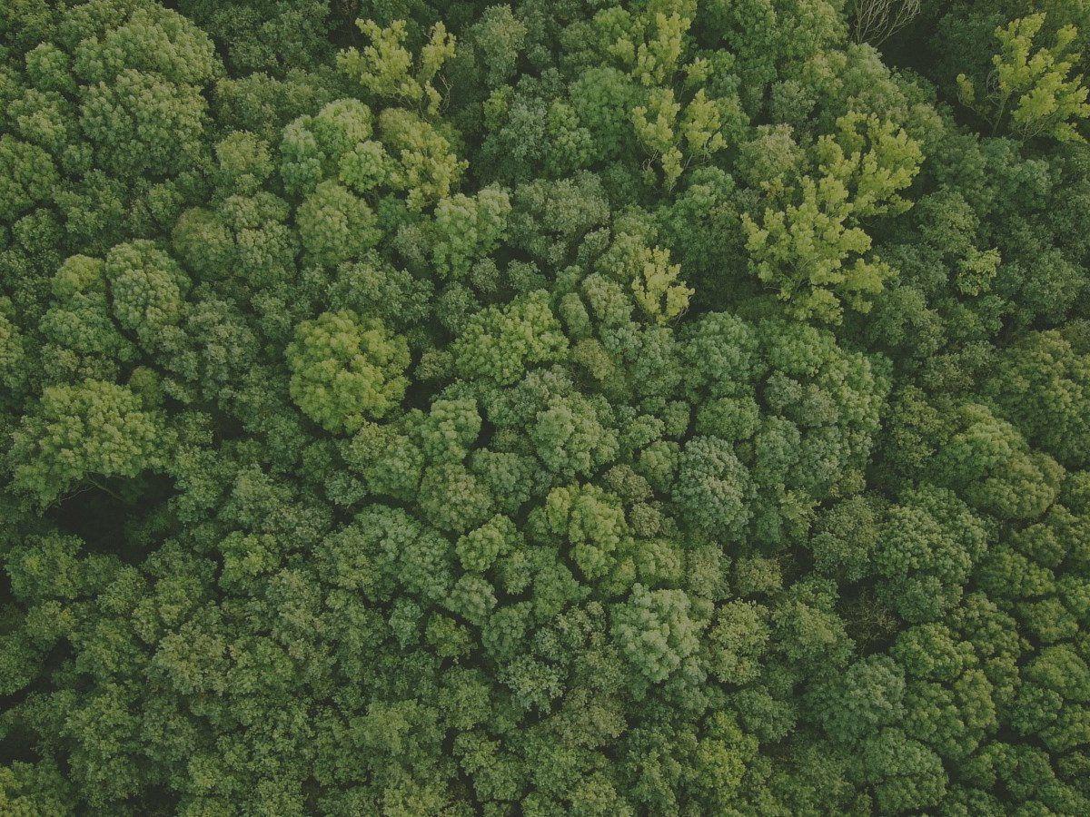 Valoración forestal certificada