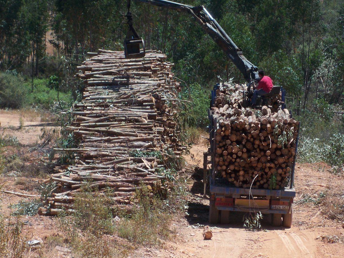 En Innofor realizamos tu valoración forestal certificada, a través de la cubicación de existencias maderables y biomasa en pie