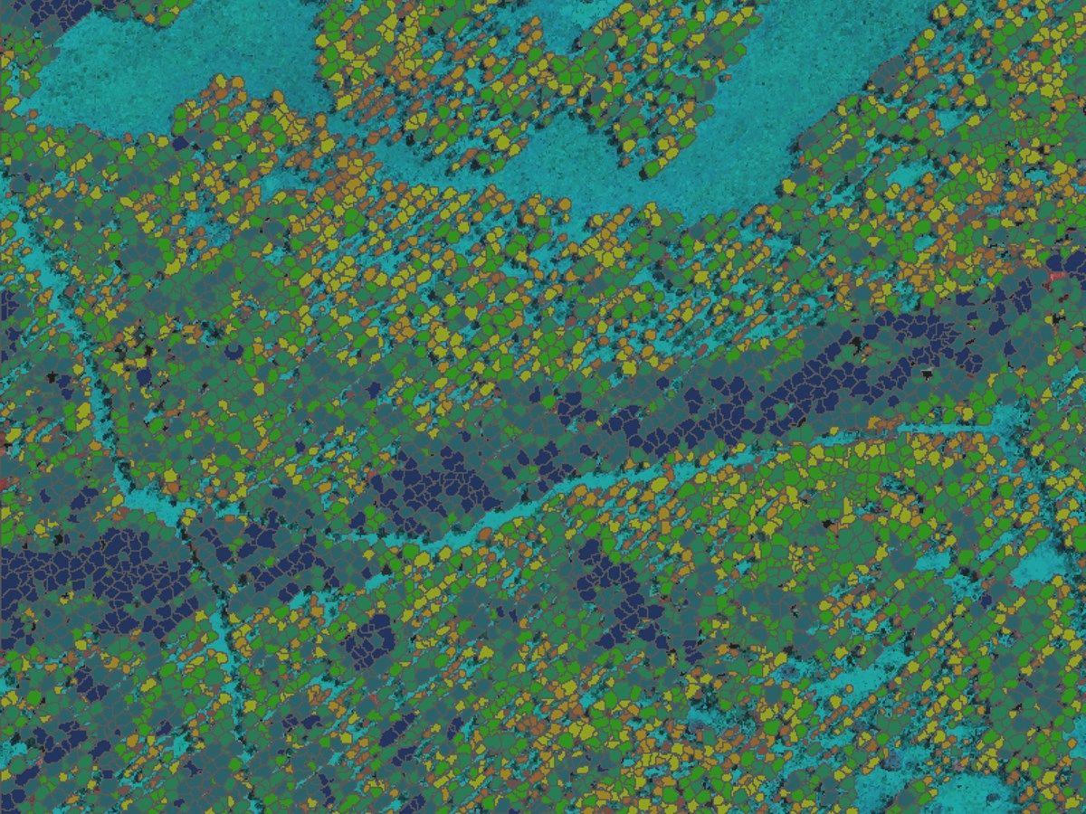 Consultoría forestal para empresas y particulares