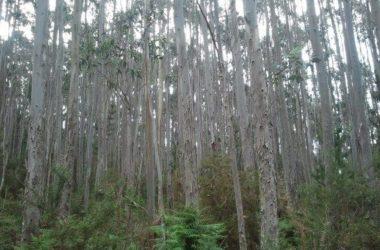 Desarrollo de software para inventario forestal continuo en masa de eucaliptos
