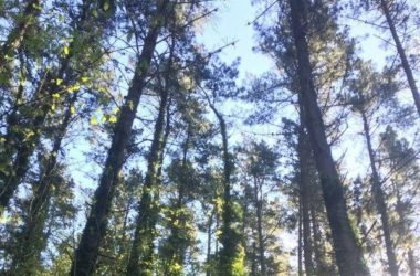 Inventario y cubicación de pinares de pino radiata con clasificación de productos maderables
