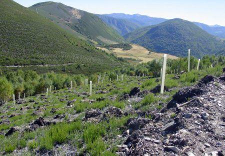 Control de repoblaciones forestales con Field-Map Density