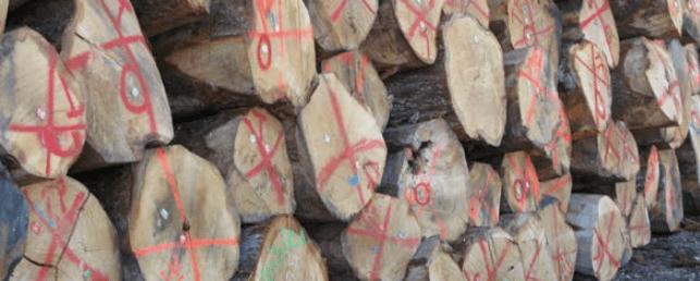Pintura de señalamiento para madera