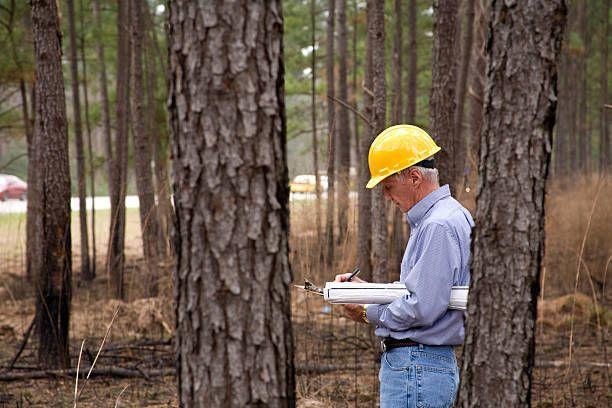 Cubicar madera; certificación forestal; precio biomasa. Servicios para proyectos forestales