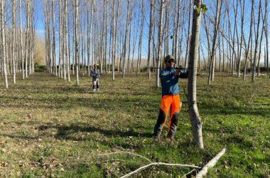 Desarrollo de software para la cubicación profesional de madera en pie